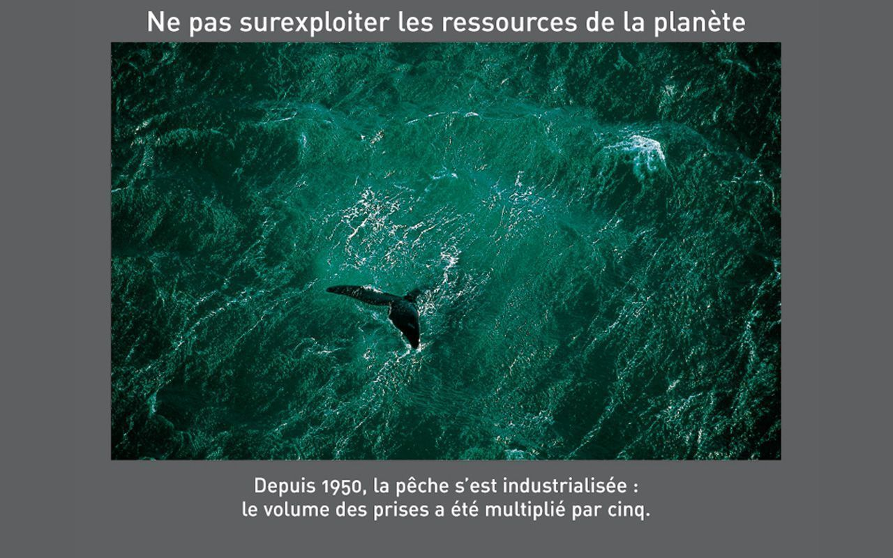 Magnifiques photos de yann arthus bertrand for Fond ecran photo yann arthus bertrand